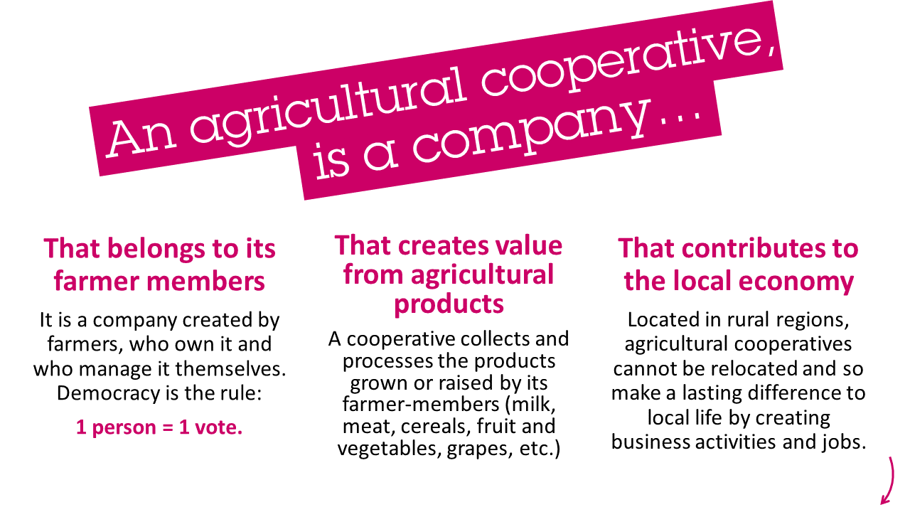 Description of cooperative companies agriculture